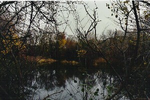 Sawin's Pond, Coolidge Ave. Watertown, MA 11/ 2003